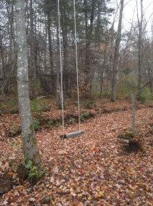 A swing in the woods